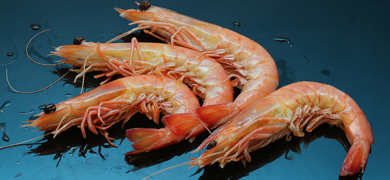 img - Industries_Primary Industries_140321_Green rating has sustainable prawn fishery making waves on global markets_bannerP